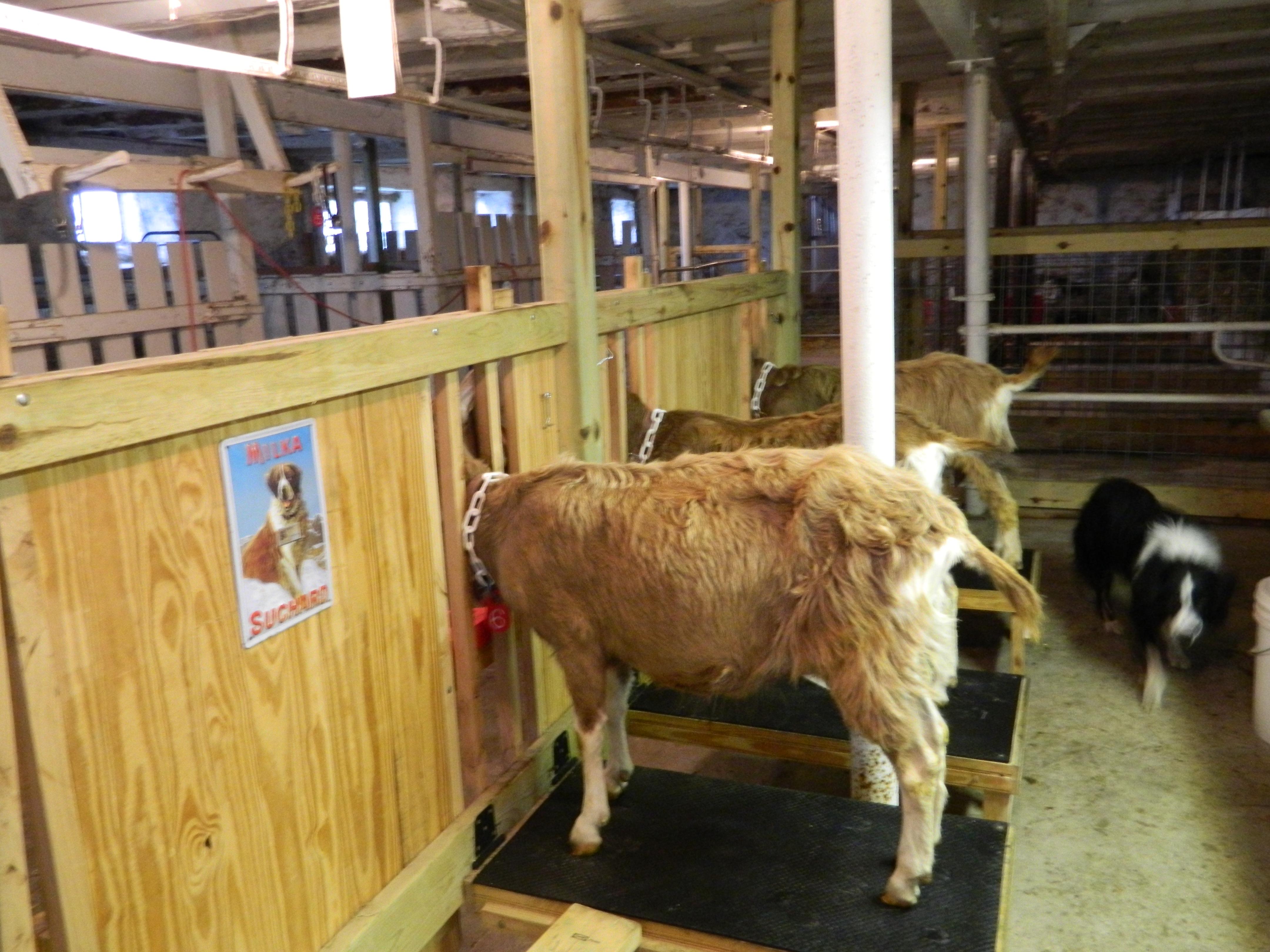 Swiss Frau Farm Products Goat S Milk Soaps Lotions