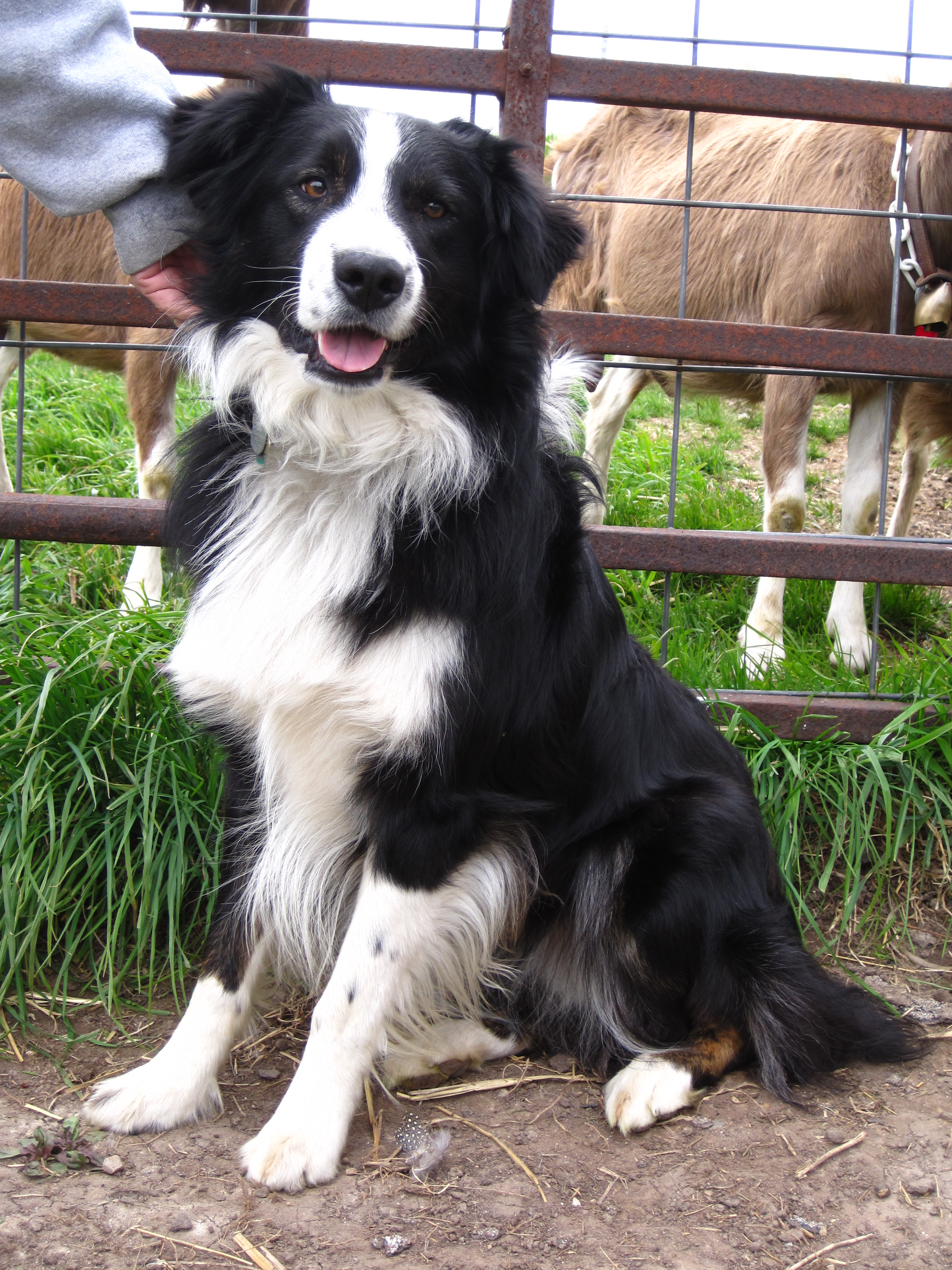 Our Working Dogs Swiss Frau Farm Products